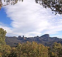 White Gum Lookout by Tainia Finlay