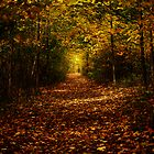 Autumn in the Sacred Grove by dbwalton