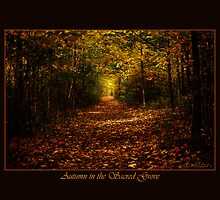 Autumn in the Sacred Grove (unlimited release) by dbwalton