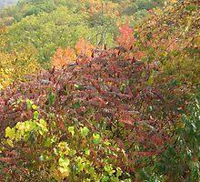 Fall colours by sohvia