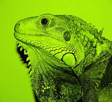 Iguana in Green by Lisa Brower