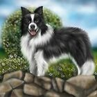 Border Collie by Lucy Marsella