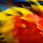 Scarlet Macaw Detail by Kiki7000