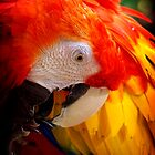 Scarlet Macaw Pair #2 by Kiki7000