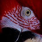 Green Wing Macaw #2 by Kiki7000