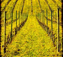 Vineyard by kilmann