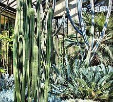 Tall Cacti by Trudy Wilkerson