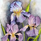 irises by shagufta