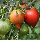 Tomatoes by Andre Roberts