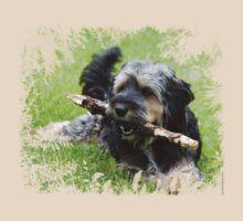 Cute dog by Mariann Rea