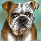 Bulldog Inglese by Lucy Marsella