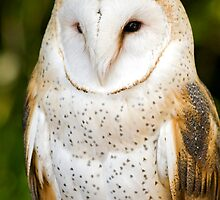 Barn Owl Stare by Bryan Peterson