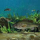 Largemouth Bass by RalphMartens