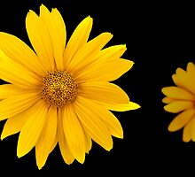 2yellow by gnubier