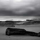 Driftwood by angusimages
