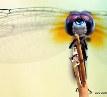Dragon Fly by Gemineye