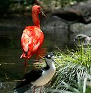 Pink Ibis by Margaret  Shark