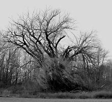 030609-37   WINDSWEPT by MICKSPIXPHOTOS