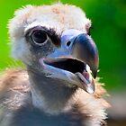 Portrait of a Vulture by gnubier