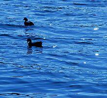 Ducks on lake by laurafay