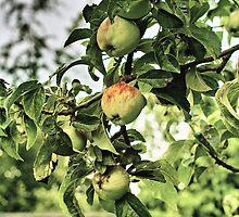 Apples by MariaVikerkaar