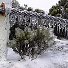 Iced Fence by largo