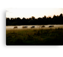 Lost in the Mist Canvas Print