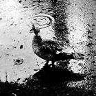 Raindrop Bird by Timothy Eric Hites