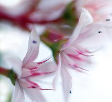 Blossoms by Renee Hubbard Fine Art Photography