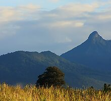 Mt Warning by Gareth Bowell