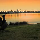 Swan River - Perth Western Australia   by EOS20
