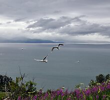 Cliff Top Thermals by Barbara Burkhardt