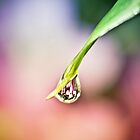 Water Droplet by NikonKid