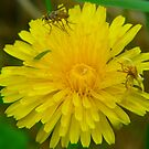 Dandilion and Friends by MaeBelle