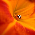 Ladybug in a Lily by kr1sta