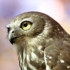 Barking Owl by Richard Majlinder