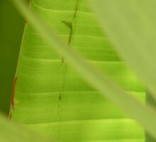 Palm Leaves 3 by Elizabeth Bravo