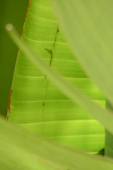 Palm Leaves 3 by Elizabeth Bravo