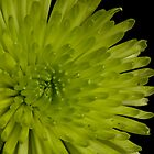 Green Bloom by Chad Suber