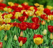 Tulips forever by SUSAN WEISENSEL