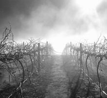Dead Vineyard by marklincoln