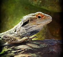 Eastern Water Dragon by DuboisDigital