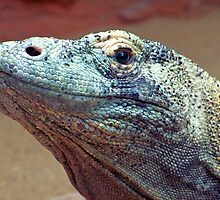 Komodo Dragon by Reddirt