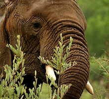 Elephant in the rain by Graeme Shannon