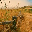 Along the Trail by Nancy Stafford