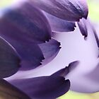 Images in Purple  by Susan Brown
