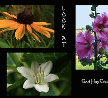 Flowers From My Yard - Collective Collage by KatsEye