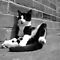 Black & White Images of Black & White Cats