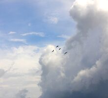 Four Little Birds by Terra Berlinski