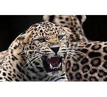 Aggressive Behaviour Photographic Print